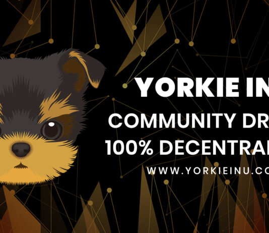 Yorkie Inu